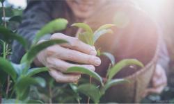 Socorro cadastra pessoas com interesse em trabalhar em atividades rurais