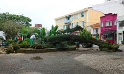 Árvore comprometida cai na Praça José Bonifácio