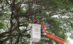 Prefeitura dá início a decoração da cidade