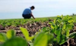 Prefeitura vai contratar estudantes universitários de agronomia