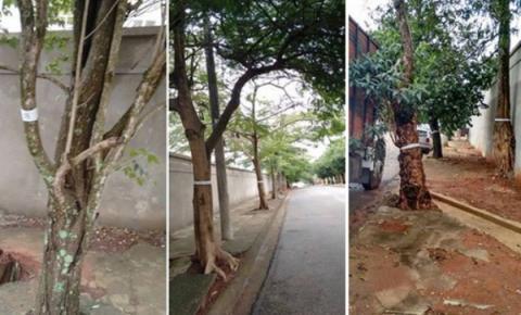 Cortes de árvores em Atibaia gera polêmica