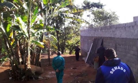 Morador em situação de rua invade área verde e dá início a uma construção