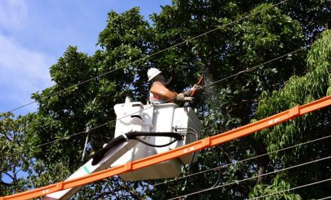 Com uso da tecnologia, Energisa mapeia árvores que oferecem riscos à rede elétrica
