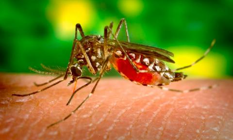 Atibaia adere à  campanha nacional contra o Aedes aegypti