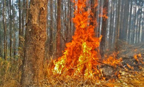 Fiscalização de queimadas é intensificada