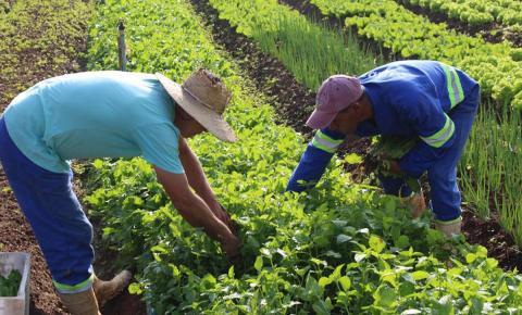 Horta Municipal garante alimentos orgânicos para instituições sociais