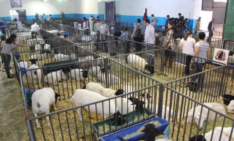 Novo modelo da Expoagro de Atibaia visa incentivar produtor rural